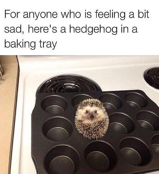 cool-hedgehog-baking-tray