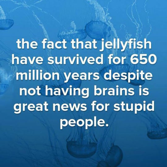 cool-jellyfish-survive-without-brains