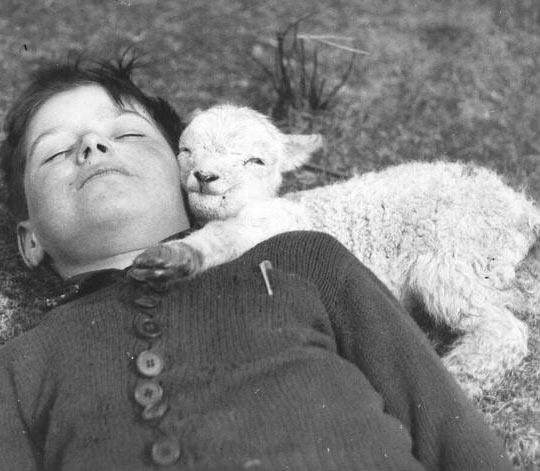 Kid And Baby Goat, Circa 1940