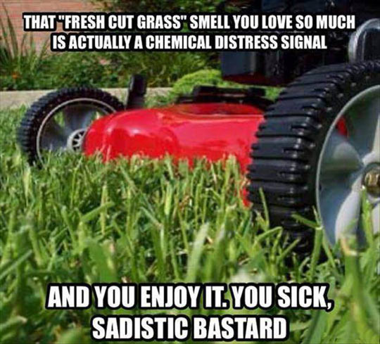 Fresh Cut Grass Smell
