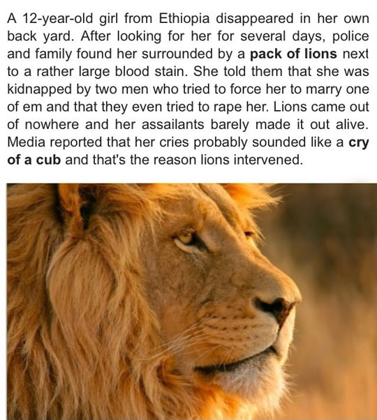 Lions Protect Kidnapped Girl