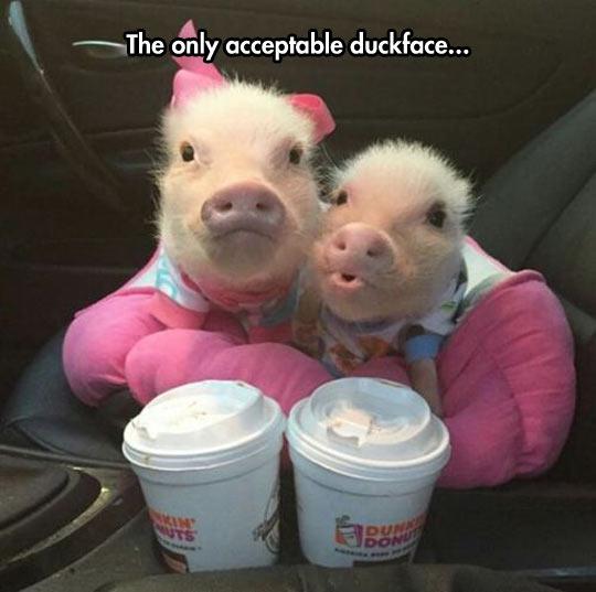 Acceptable Duckface