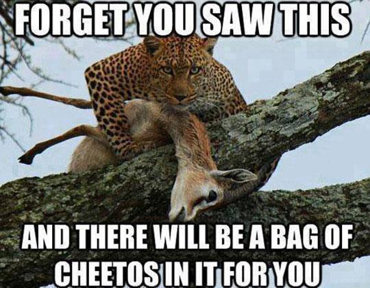cool-menacing-cheetah-hunting-deer