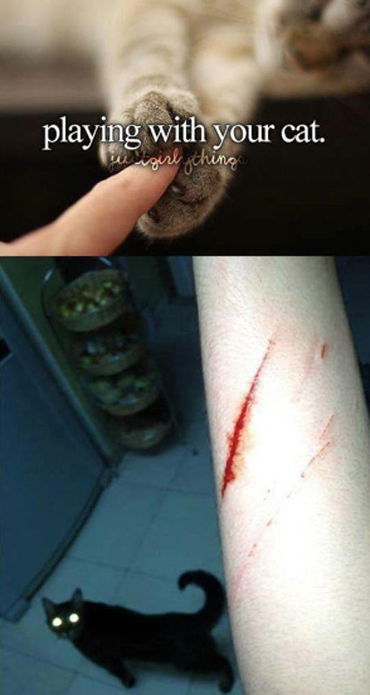 cool-playing-with-your-cat-paw-wound