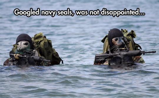 cool-seals-navy-soldier-ocean