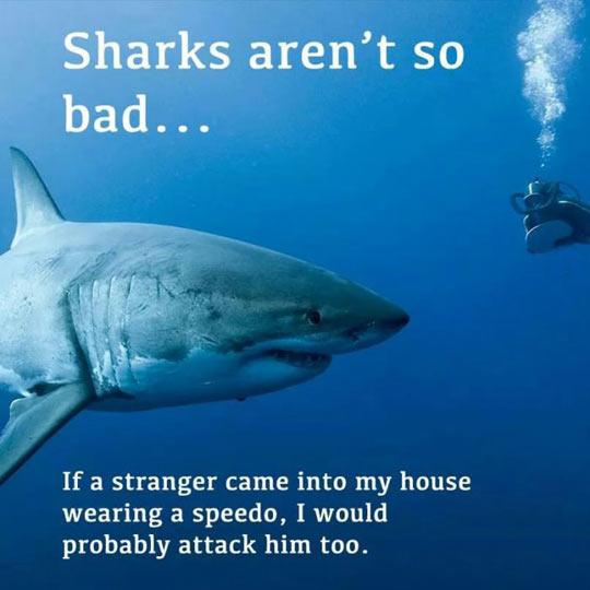 cool-shark-ocean-diver-attack