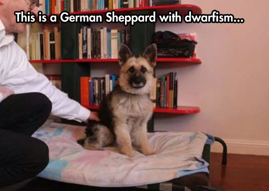 So What Is This, A German Sheppard For Ants?