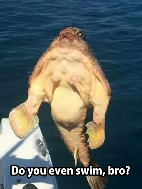 This Fish Definitely Lifts