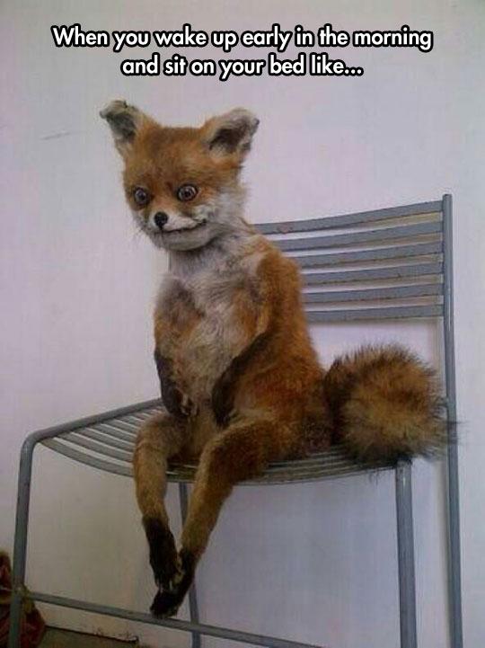 cool-stuffed-fox-seated-ugly