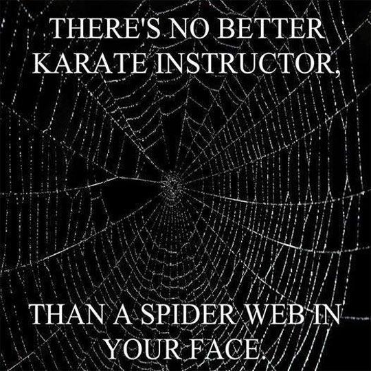 cool-web-spider-karate-instructor