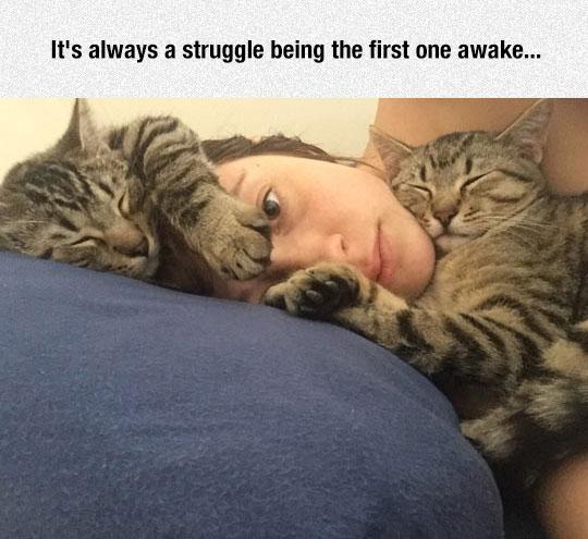 cute-cats-sleeping-pillow-girl