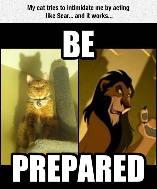 funny-cat-Scar-Lion-King