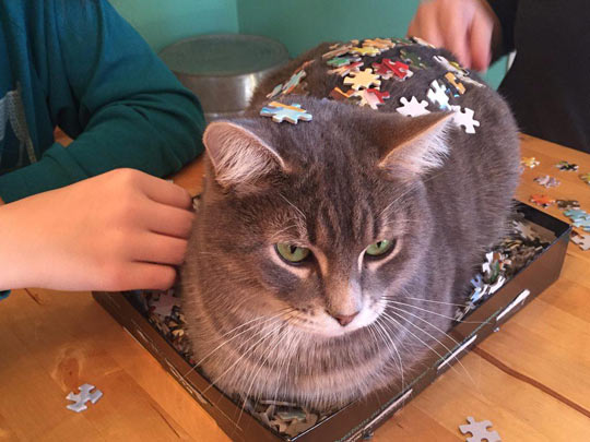 funny-cat-puzzle-board-game