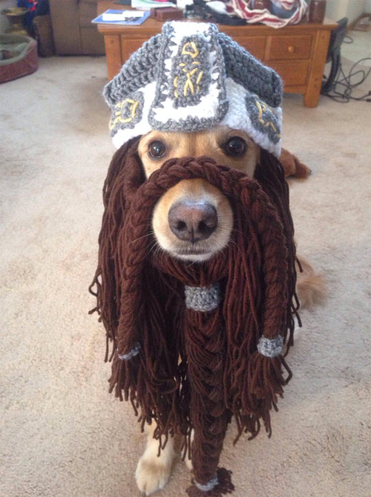 funny-dog-beard-crochet