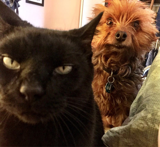 When The Cat Is Plotting To Kill You And The Dog Is Trying To Warn You