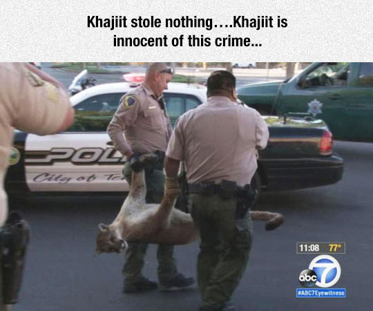 Khajiit Is Innocent