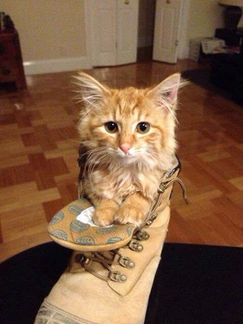 little puss in boots