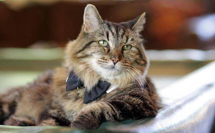 oldest_cat_01