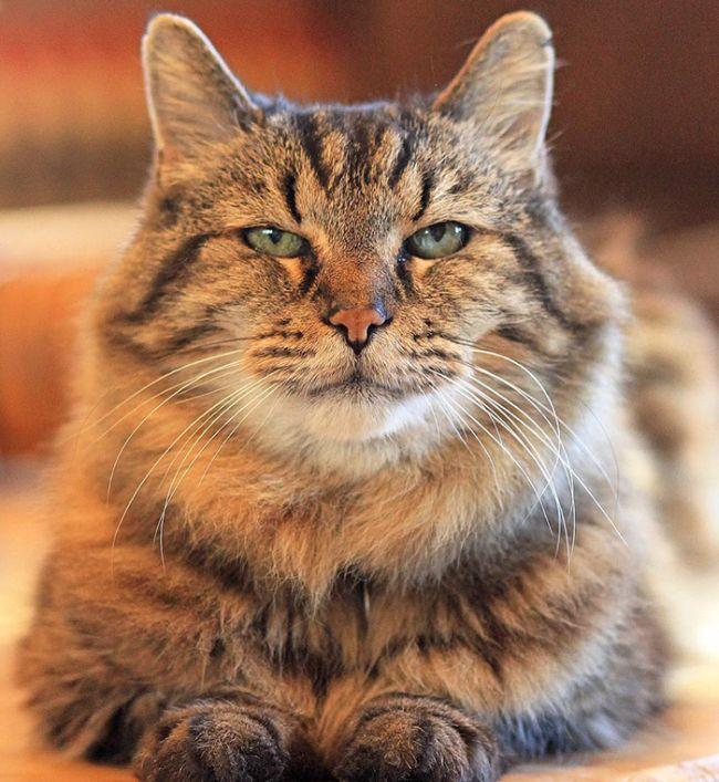 oldest_cat_02