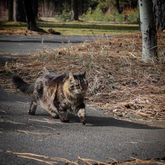 oldest_cat_03