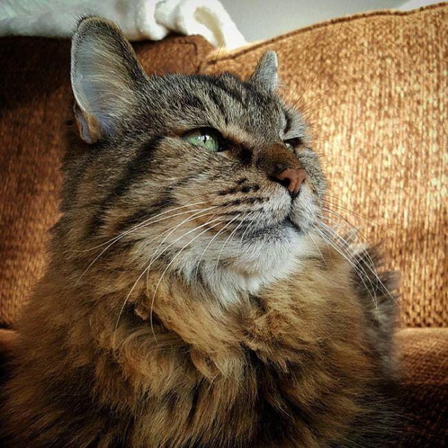 oldest_cat_08