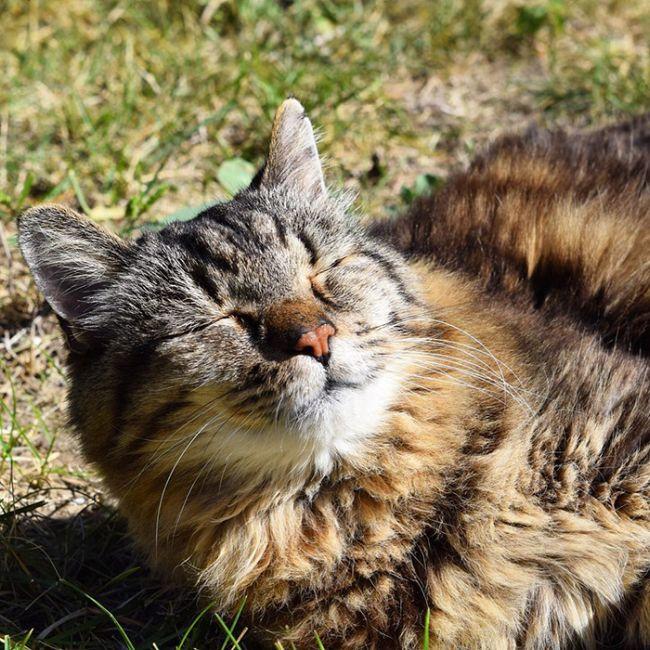 oldest_cat_10