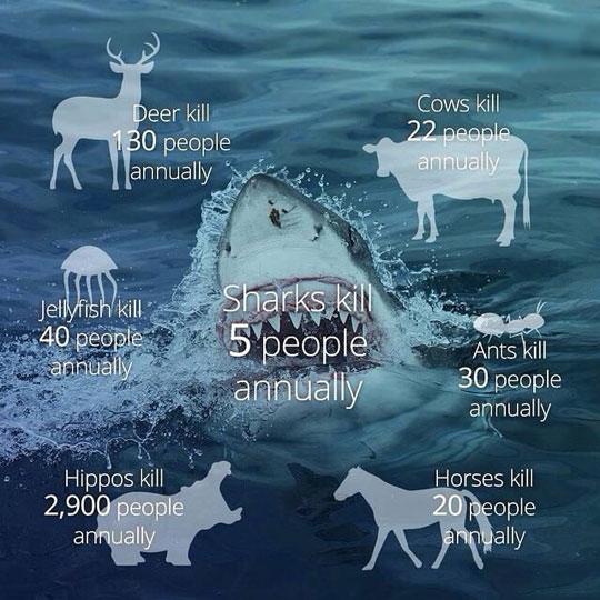 shark-stats-water-teeth