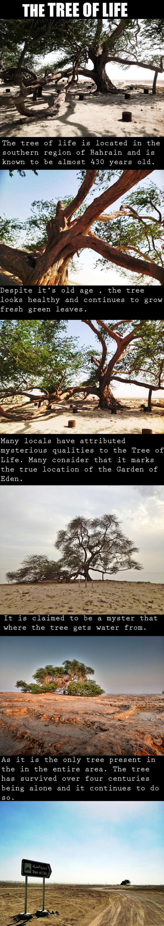 Miraculous Survival In The Desert