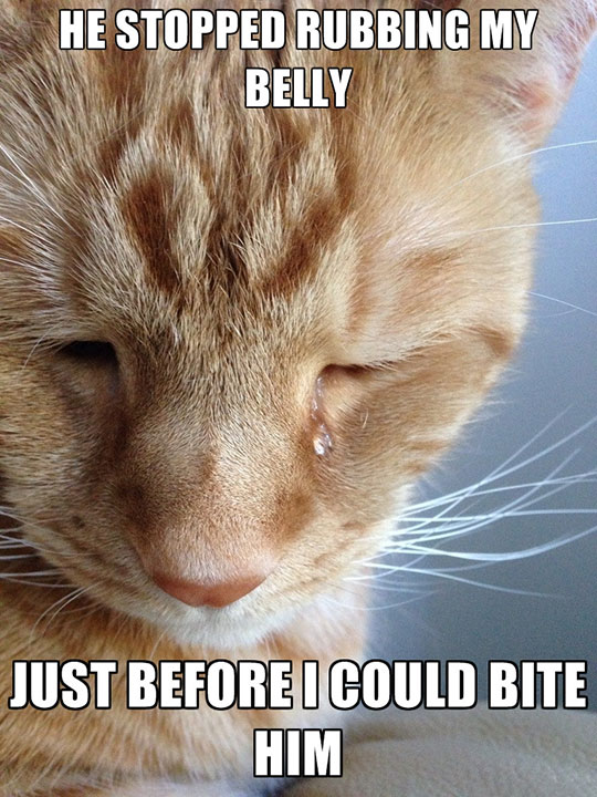A Cat's First World Problems