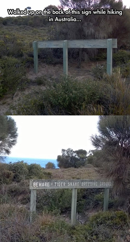 Australia Feels Like Jurassic Park