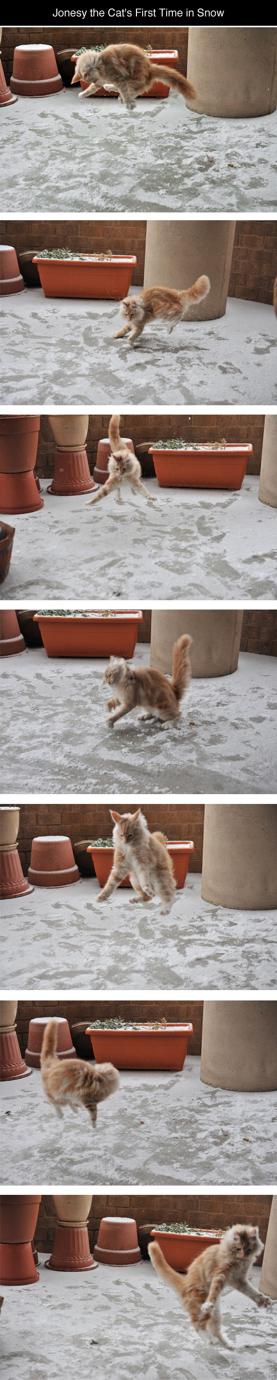 Cat Discovers Snow