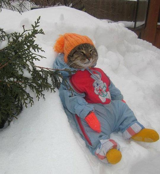 Cat Enjoying Winter