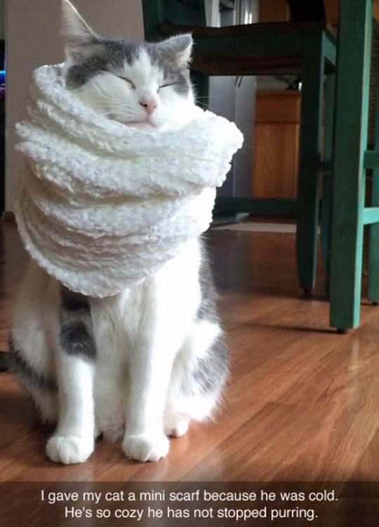 Cozy Kitty Scarf