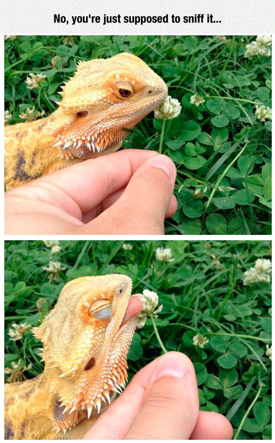 Dragon Loves Flowers