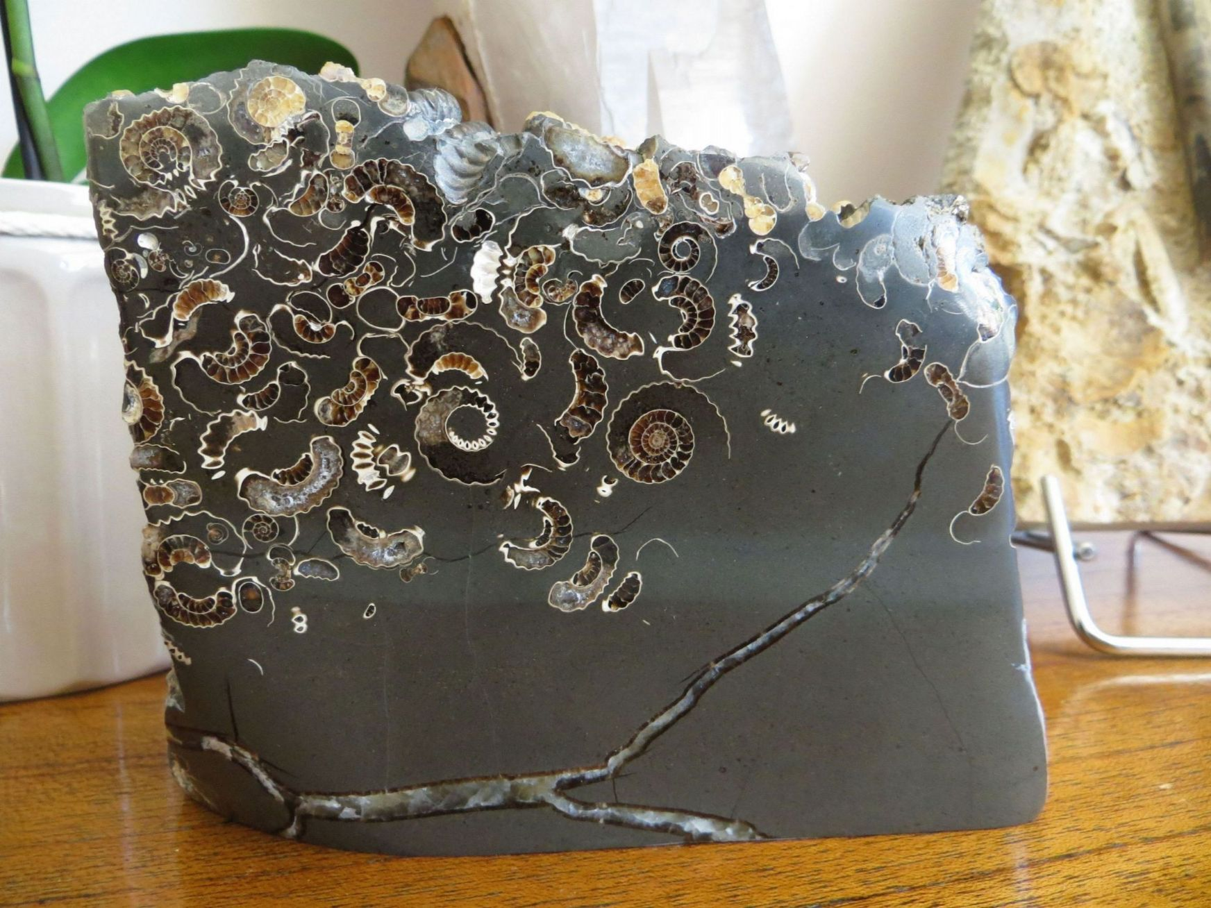 Fossils in a piece of marble