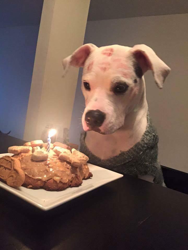 Friends dog had her first birthday