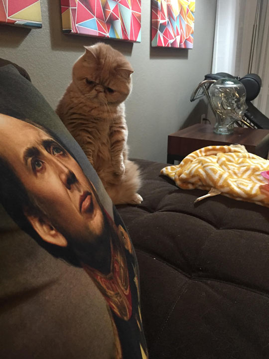 My Cat Is Skeptical Of This Pillow