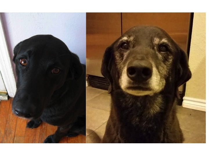 My dog 10 years ago and today