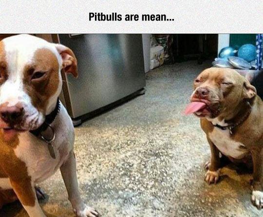 That's Not Nice, Mr. Pitbull