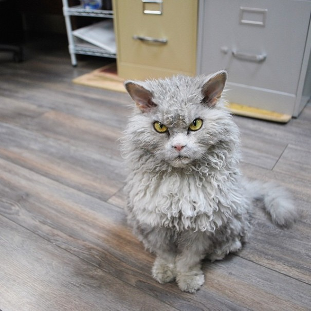 This is Albert.