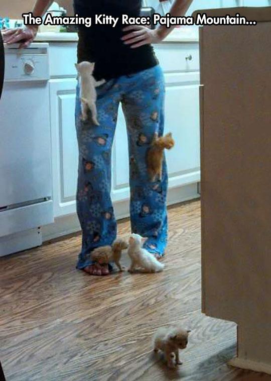 Velcro Kitties