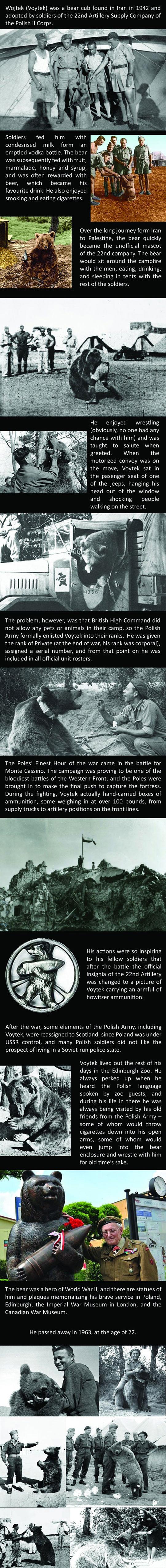 army-bear-Voytek-Polish