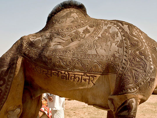 camel-haircut-desert-fur