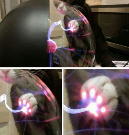 cat-touching-plasma-ball
