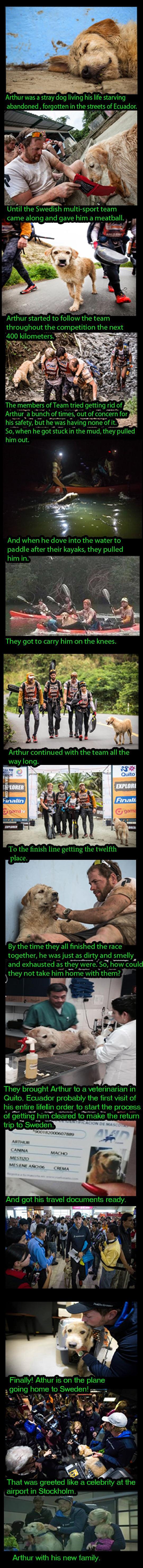 cool-Arthur-stray-dog-Sweden-Team