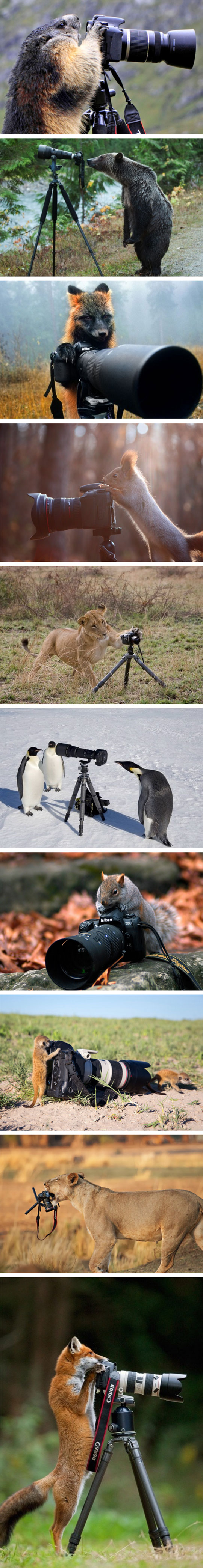Animals Who Want To Be Photographers