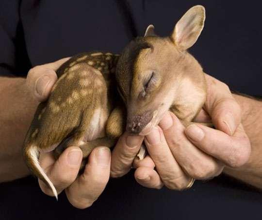 Just In Case Your Day Needs More Baby Deer