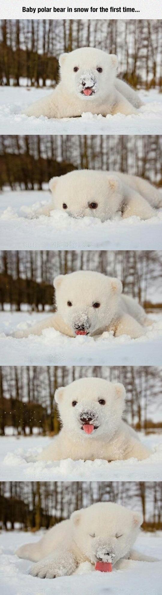 cool-bear-polar-baby-snow-first-time