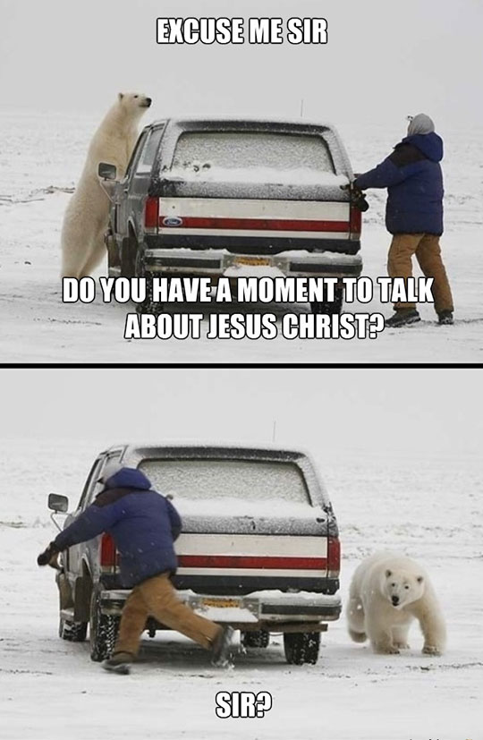 cool-bear-polar-car-Jesus