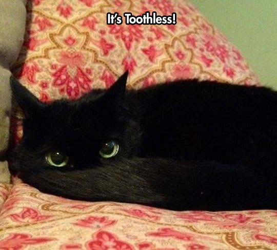 cool-cat-Toothless-eyes